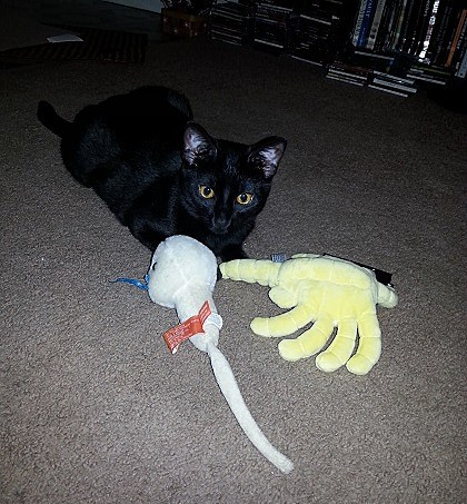 That is a tiny Face Hugger from 'Alien' and a toy sperm I got as a gag gift one Christmas. Jokes on you, she loves it.